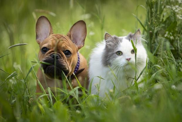Hund und Katze im hohen Gras - Hundezecken sind allgegenwärtig