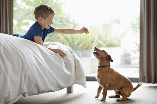 Junge füttert Hund