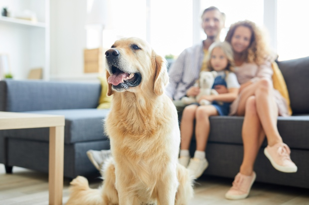 Hund im Vordergrund, Familie im Hintergrund