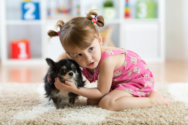 Kleinkind umarmt kleinen Chihuahua