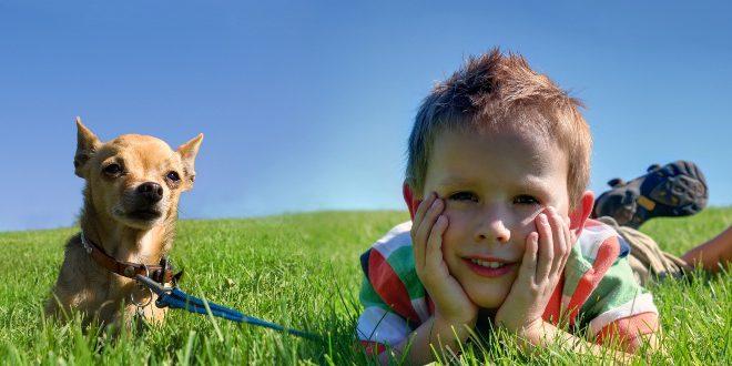 Chihuaha mit Kind - Gesellschaftshunde