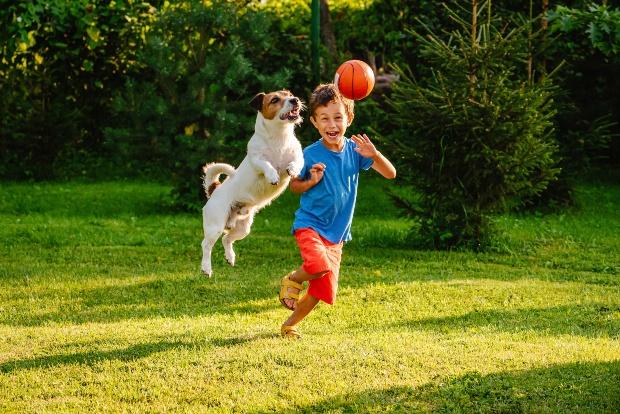 Junge spielt mit Hund im Garten - Kleinhunde für Familien
