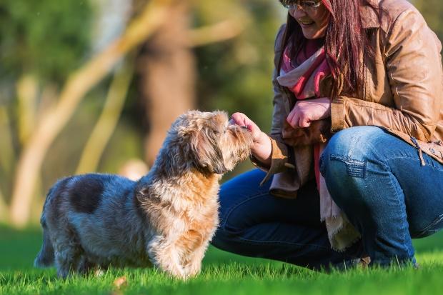 Junge Frau füttert ihrem Hund einen Snack