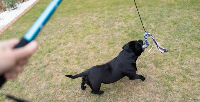 Hund beim Reizangeltraining