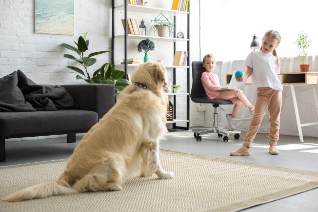 Mädchen mit Ball trainiert Hund