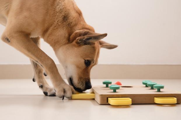 Hund puzzelt - Hund zuhause beschäftigen