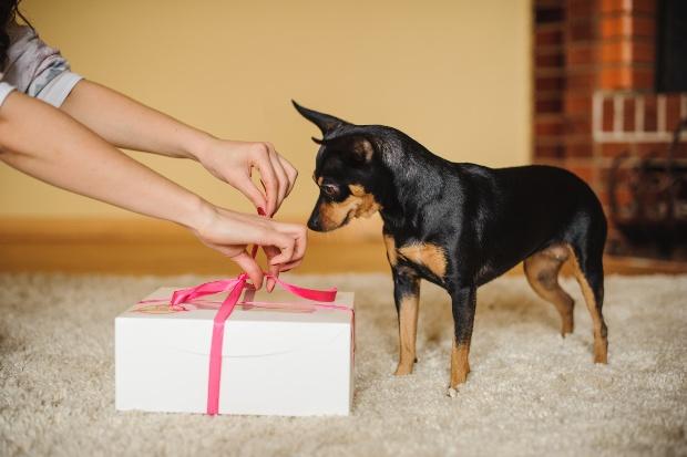 Hund schaut auf ein Geschenkbox - Hund zuhause beschäftigen