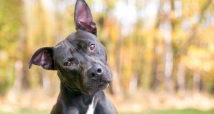Hund neigt den Kopf - Körpersprache bei Hunden