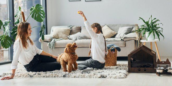 Hund zuhause beschäftigen