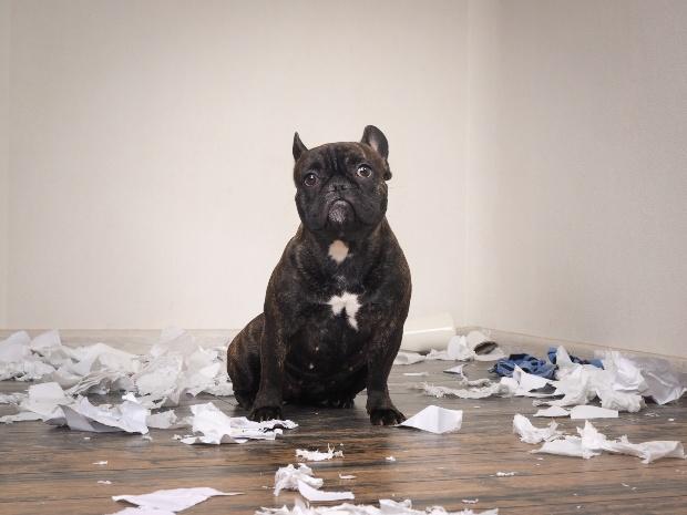 Hund hat Papier zerfetzt