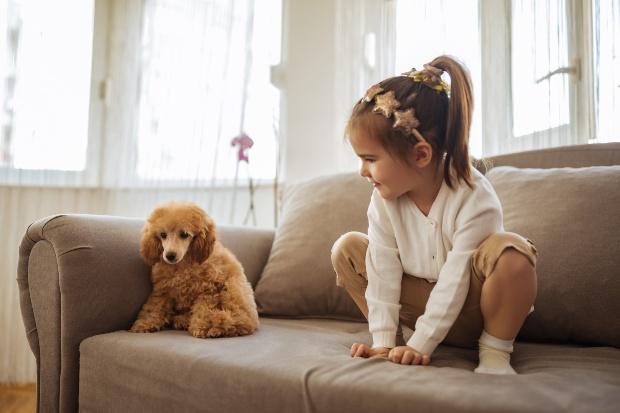 Junger Hund verwirrt mit einem kleinen Kind auf dem Sofa