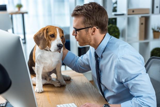 Junger Mann mit einem Hund bei der Arbeit - Dogsharing als Option für beschäftigte Menschen