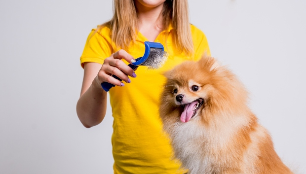 Frau bürstet Hund + für einen sauberen haushalt mit Hund