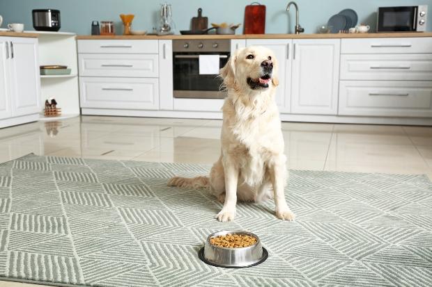 Hund sitzt in Küche vor Futternapf - Regeln und Ordnung für einen sauberen Haushalt mit Hund