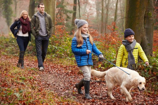 Familie spaziert mit Hund im Wald