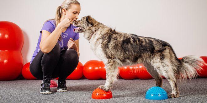 Frauchen trainiert Hund mit Balncekissen