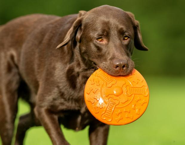 Um das Gebiss des Hundes zu schonen gibt es spezielle Discs