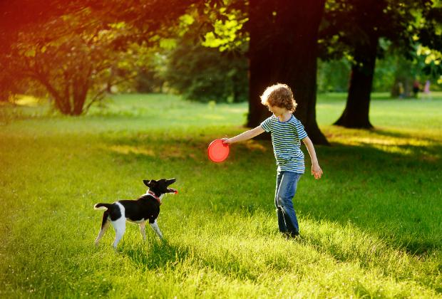 Wichtig ist, dass der Hund aufgewärmt und die Umgebung sicher ist