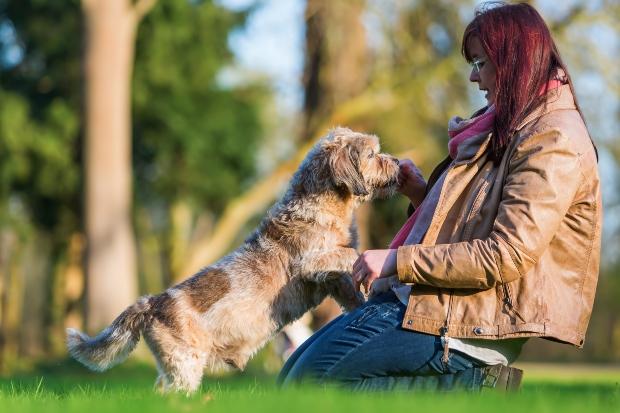 Älterer Hund bekommt Leckerli von Frauchen - Hundesenioren profitieren von gesunder Ernährung