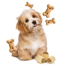 nierendiät hund leckerchen