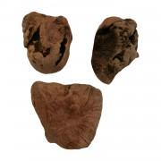 Kauwurzel (Heidebaumwurzel)-Gr. XS