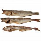 Kabeljau ( ganze Fische )