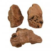 Kauwurzel (Heidebaumwurzel)-Gr.S